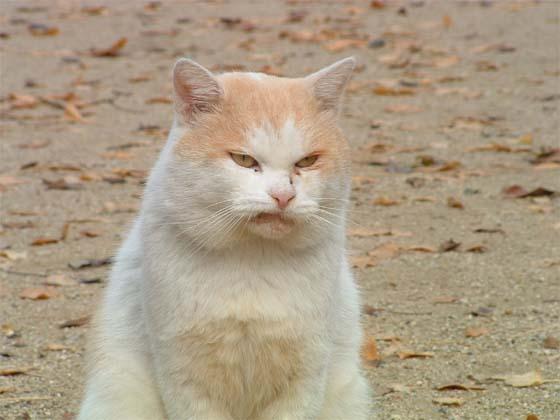 カッコいい猫の画像-133_1