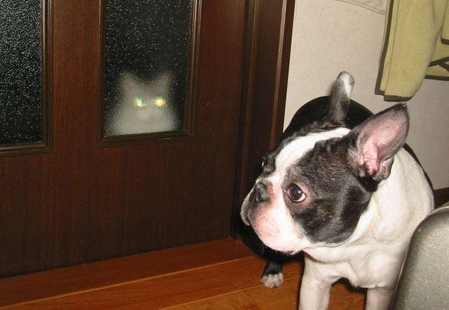 カッコいい猫の画像-094
