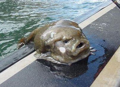 海に住む奇妙な生き物の画像-044_5