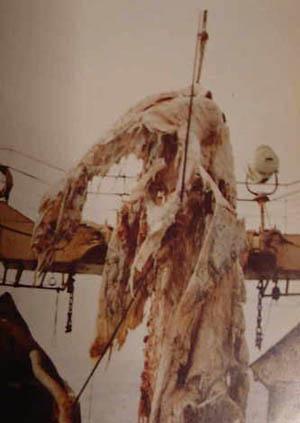 UMA・巨大生物・変な生物の画像くれ-039