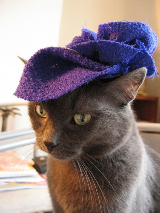 カッコいい猫の画像-149
