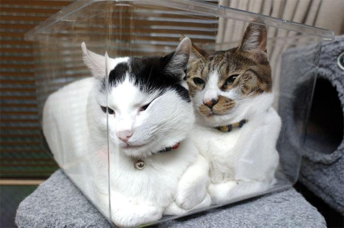 猫が袋に入ってる-101