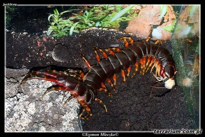世界で一番の生き物-153