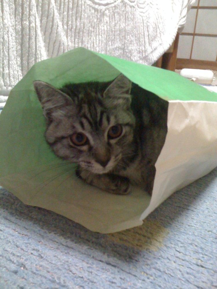 猫が袋に入ってる-010
