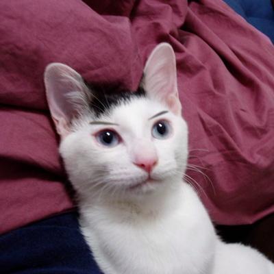 ネコの画像ください-046