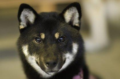 柴犬、秋田犬画像スレ-093_1