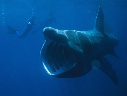 UMA・巨大生物・変な生物の画像くれ-007