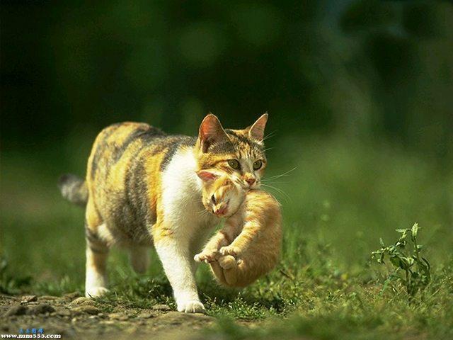カッコいい猫の画像-126_2