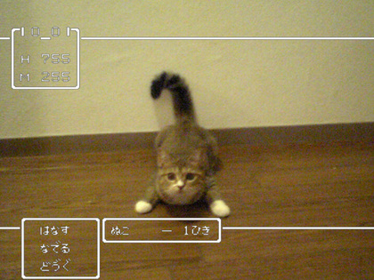 ネコの画像ください-071