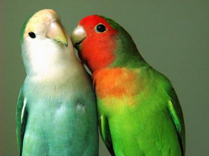 鳥の画像ください-049