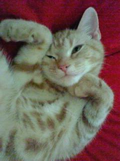 ネコの画像ください-044