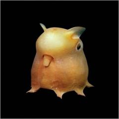 UMA・巨大生物・変な生物の画像くれ-013