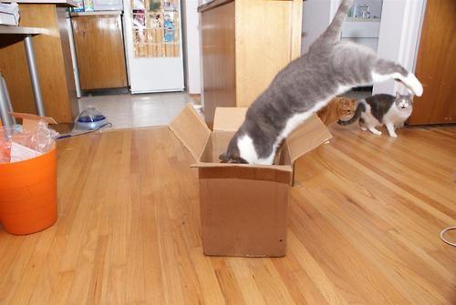 猫が袋に入ってる-098