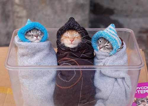 猫が袋に入ってる-017