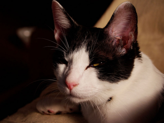 カッコいい猫の画像-135_1