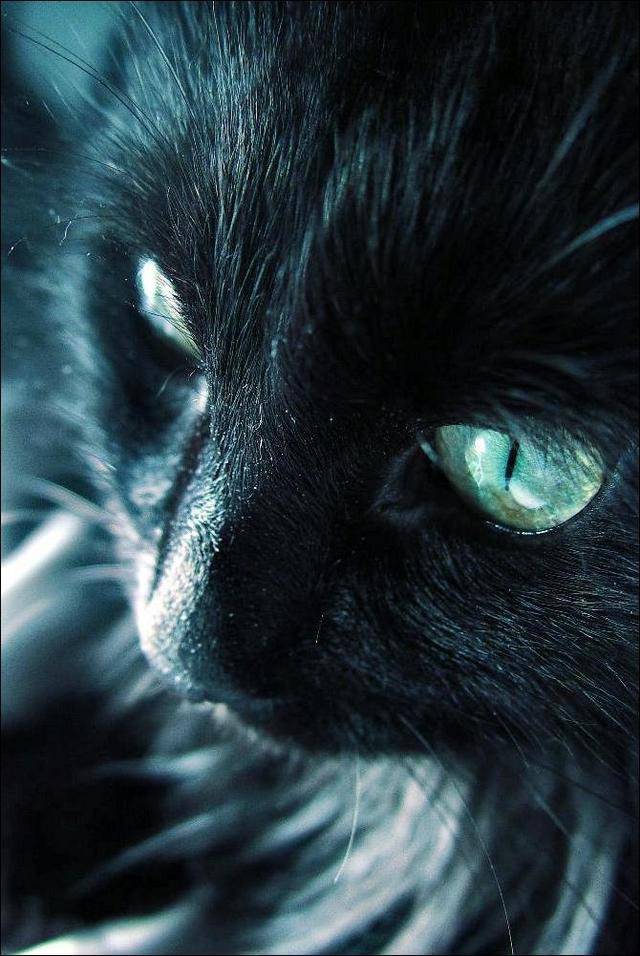 カッコいい猫の画像-125