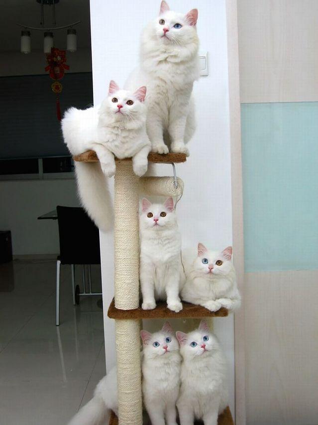カッコいい猫の画像-129