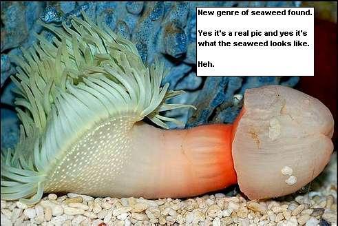 海に住む奇妙な生き物の画像-062