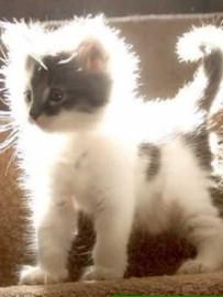 カッコいい猫の画像-034