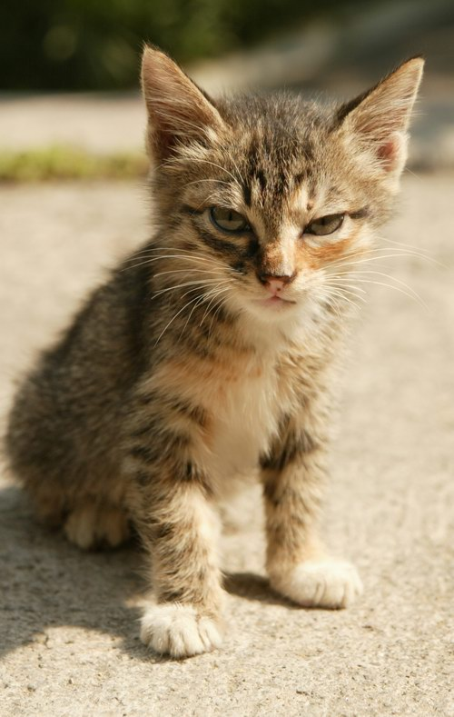 カッコいい猫の画像-140