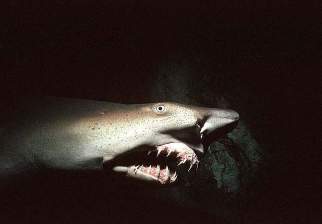 海に住む奇妙な生き物の画像-025