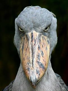鳥の画像ください-058