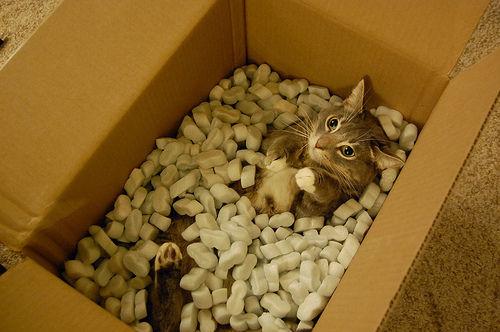 猫が袋に入ってる-051