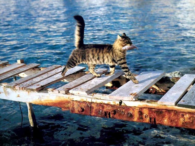 猫飼いたくなるね-012_02
