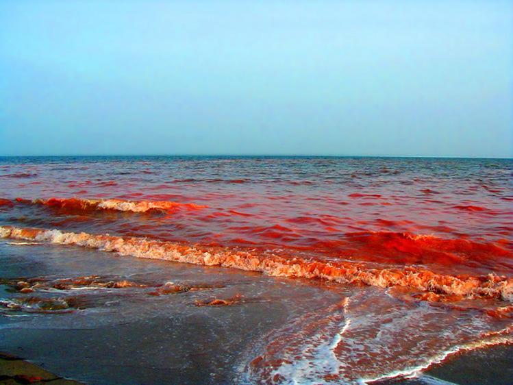 海が真っ赤に染まるイルカ漁-392
