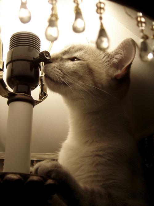 カッコいい猫の画像-046