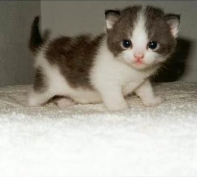 ネコの画像ください-066