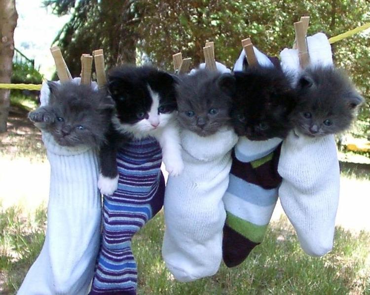 猫が袋に入ってる-034