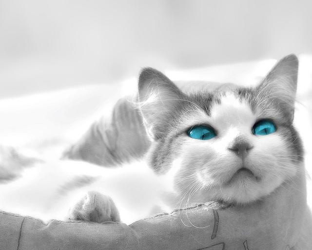 カッコいい猫の画像-137_1