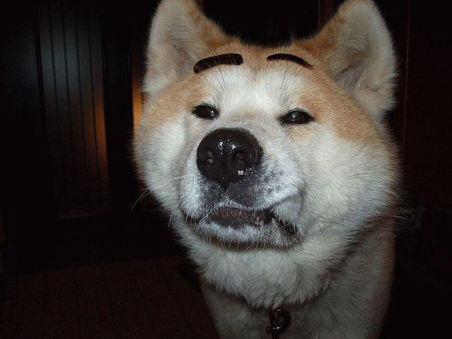 犬貼るお-094