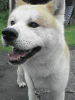 柴犬、秋田犬画像スレ-123