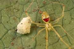 UMA・巨大生物・変な生物の画像くれ-056