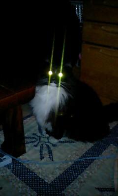 カッコいい猫の画像-037