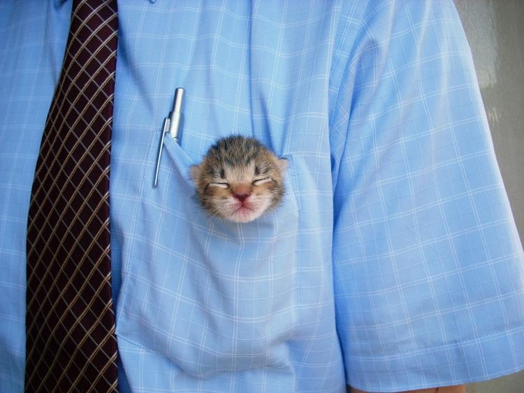 猫が袋に入ってる-008