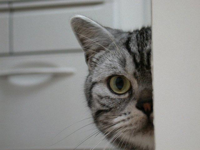 カッコいい猫の画像-040