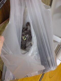 猫が袋に入ってる-005