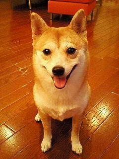 柴犬、秋田犬画像スレ-049