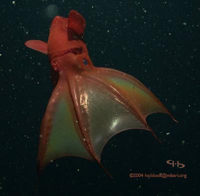 海に住む奇妙な生き物の画像-003_3