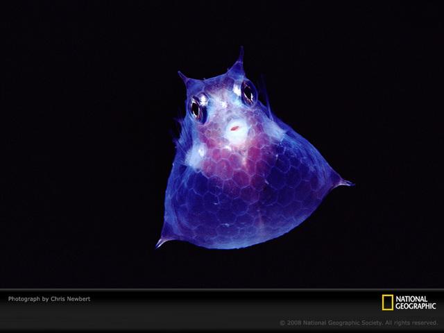 海に住む奇妙な生き物の画像-049_1
