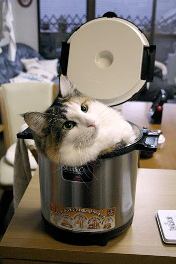 猫が袋に入ってる-099