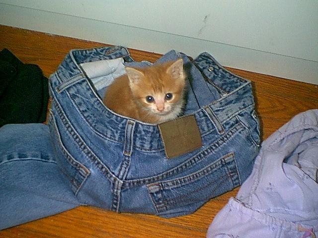 猫が袋に入ってる-049
