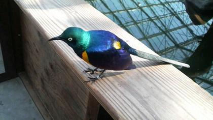 鳥の画像ください-081_2