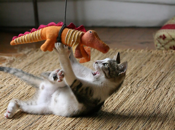 カッコいい猫の画像-042