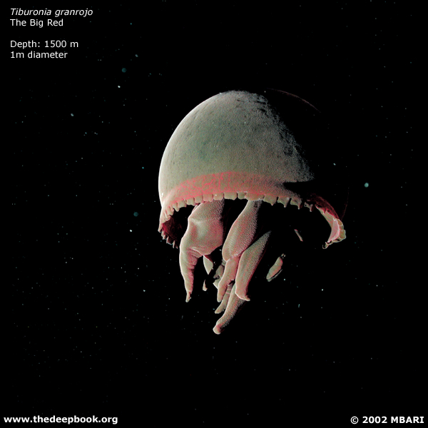 海に住む奇妙な生き物の画像-033_2