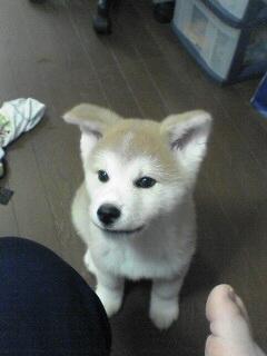 柴犬、秋田犬画像スレ-137