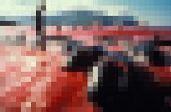 海が真っ赤に染まるイルカ漁-001_11